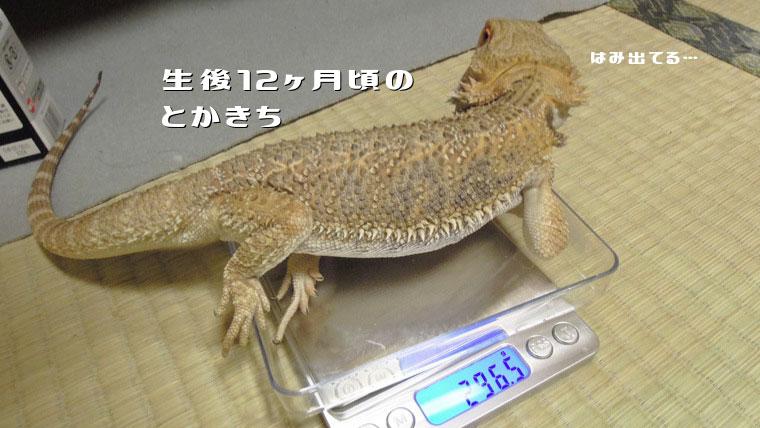 とかきち体重測定