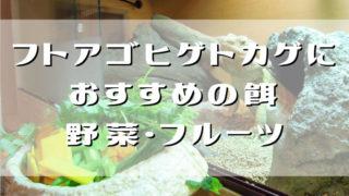 フトアゴおすすめ餌・野菜フルーツ