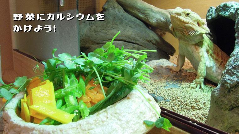 フトアゴの餌にはカルシウムをかけよう!野菜