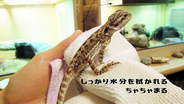 フトアゴ温浴4