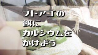 フトアゴヒゲトカゲの餌にカルシウムをかけよう