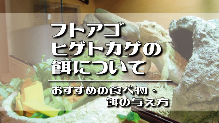 フトアゴヒゲトカゲにおすすめの食べ物・餌の与え方
