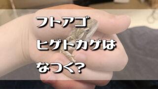 フトアゴヒゲトカゲはなつく?