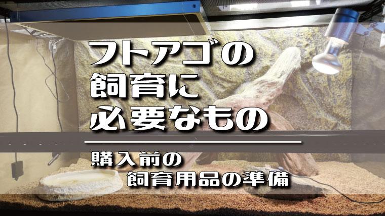 フトアゴヒゲトカゲ飼育に必要なもの!購入する前の飼育用品の準備