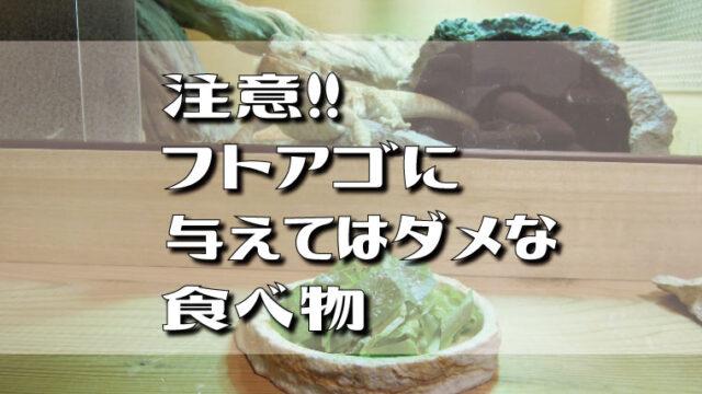 注意!フトアゴヒゲトカゲに与えてはダメな食べ物・野菜